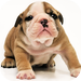 Guess The Puppy 3 HD